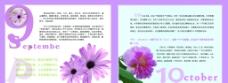 花卉画册图片