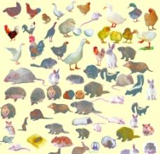 鸡禽动物图片