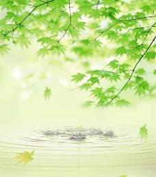清幽 水滴 树叶 水波纹图片