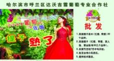 葡萄园大喷绘广告图片