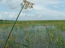 湿地保护区