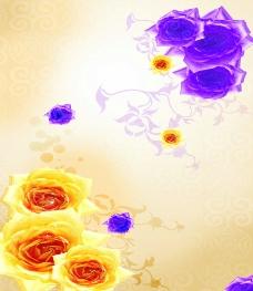 玫瑰花的羞涩图片