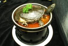 红煨甲鱼图片