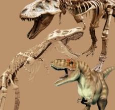恐龙 霸王龙 分层骨架图片