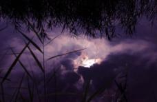 紫云下的芦苇图片