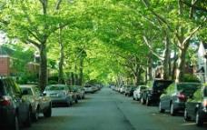 纽约 长岛 道路和两旁别墅图片