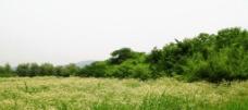 遍地野花香图片