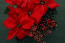 红色花卉摄影图片