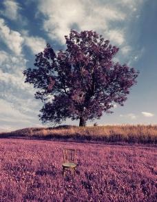 紫色的树图片