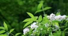 九寨沟野花图片