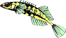 海洋动物1421