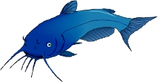 海洋动物1724