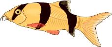 海洋动物1981