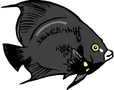 海洋动物1923