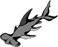 海洋动物1641