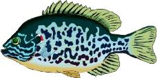 海洋动物2053
