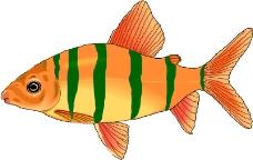 海洋动物1682