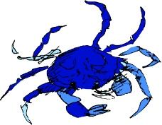 海洋动物1240
