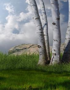 漂亮的树干图片