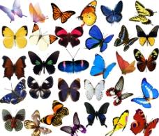 蝴蝶 蝴蝶素材图片