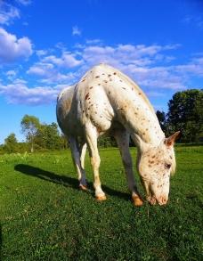 漂亮的斑点马图片