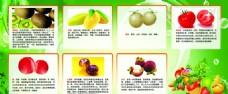 水果的营养