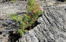 五大连池火山岩植物图片
