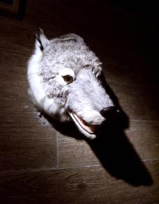 狼图腾图片