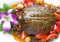 大盘甲鱼图片