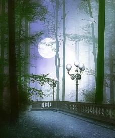 梦幻森林图片图片