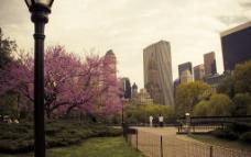 纽约 美丽的中央公园图片