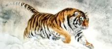 猛虎踏雪原图片